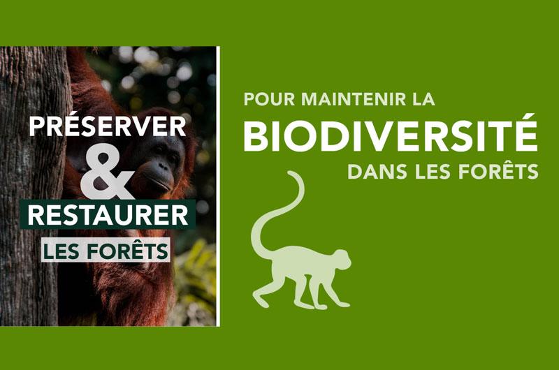 Reforestation Biodiversité