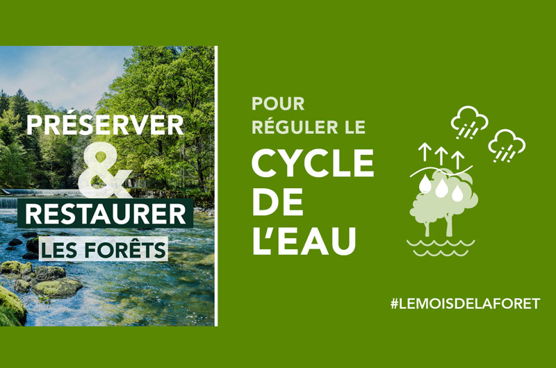 Reforestation cycle eau